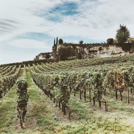artisan champagne - French vineyard